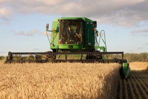 Harvesting, oogsten