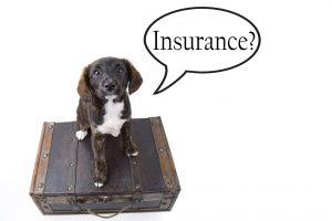 Insurance? Hond op een koffer.