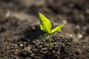 Landbouw, gewassen, gecultiveerd land