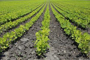 Gewassen, landbouw