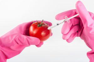 Genetische modificatie, tomaat, injectie