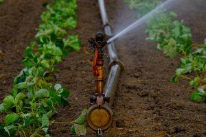 sprinklerinstallaties, besproeien van gewassen